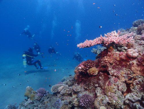 Egipt nurkowanie